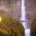 Lamplight At Multnomah Falls by Lynn Bauer