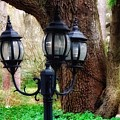 Lamppost And Oak by Paul Wilford