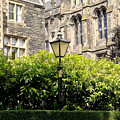 Lamppost In Front Of Green Bushes And Old Walls. by Elena Perelman
