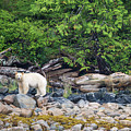 Land Of The Spirit Bear by Max Waugh