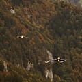 Landing by Angel Ciesniarska