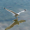 Landing by Nicola Simeoni