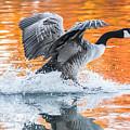 Landing by Parker Cunningham