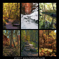 Landscape Fall Color Collage 2 by Tam Ryan