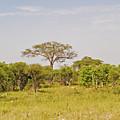 Landscape In Botswana by Marek Poplawski