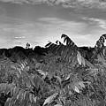 Landscape In Contrast by Ronald Searl