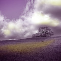 Landscape In Purple And Gold by Laura Iverson