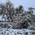 Landscape In The Snow by Michael Putthoff