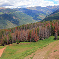 Landscape In Vail by Madeline Ellis