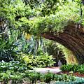 Landscape Rip Van Winkle Gardens Louisiana  by Chuck Kuhn