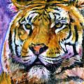 Landscape Tiger by John D Benson