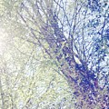 Landscape Tree Art Digital Collage Spring Sun Silver Birch by Itsonlythemoon