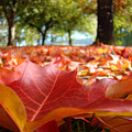 Landscape Trees Park Art Prints Autumn Fall Leaves Baslee Troutman by Baslee Troutman