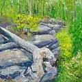Lane Cove Burnt Stump by Dai Wynn