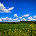 Lanesboro Fields by Bill Tiepelman