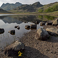 Langdale Pikes And Blea Tarn by Derek Beattie