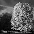Langley Morn by Bill Kellett