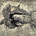 Langleys Sunspot Observation, 1873 by Wellcome Images