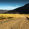 Lanin National Park by Rodrigo Kaspary
