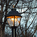 Lantern by Elly Potamianos