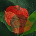 Lantern Flower by Manfred Lutzius