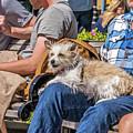 Lap Dog by Kate Brown