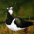 Lapwing by Maria Woithofer