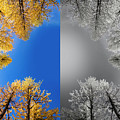Larches Color To Black And White Reflection by Pelo Blanco Photo