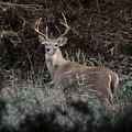 Large Buck by John Johnson