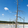 Large Dead Standing Tree In Hot Springs  by Thomas Baker