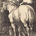 Large Horse by Albrecht D?rer