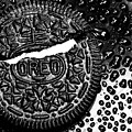 Large Oreo Black And White  by Nancy Mueller