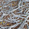 Large Root System by Yali Shi