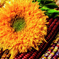 Large Sunflower On Indian Corn by Garry Gay
