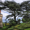 Large Trees At Chateau De Chaumont by Dave Mills