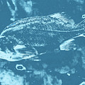 Largemouth Bass 8 by Chris Taggart
