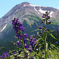 Larkspur Wildflowers by Crystal Garner