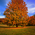 Last Call Of Fall by John Absher