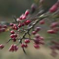 Last Colors Of Autumn by Wedigo Ferchland