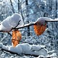 Last Leaves by Karen Stahlros
