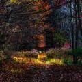 Last Light by Rob Weisman