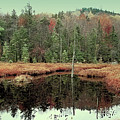 Last Of Autumn On Fly Pond by David Patterson