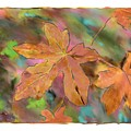 Last Of The Fall Leaves Abstract Digital Art by Sandy Belk