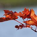 Last Of The Leaves by Joy Bradley