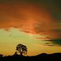 Last Rays Of Light by Angel Ciesniarska