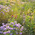Last Rays Of Sun Light Wildflowers In Moraine Hills Sp by Ray Mathis