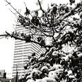 Last Snow Fall  by Ed Lumbert