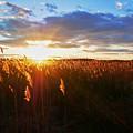 Last Sunset, Plum Island by Karyn Regal