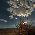Late Afternoon In The Bristlecone Forest by Tim Bryan