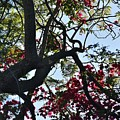 Late Afternoon Tree Silhouette With Bougainvilleas I by Linda Brody